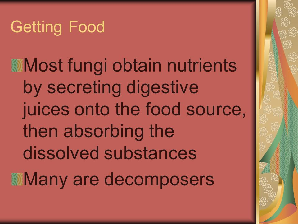 Getting Food Most fungi obtain nutrients by secreting digestive juices onto the food source, then absorbing the dissolved substances.