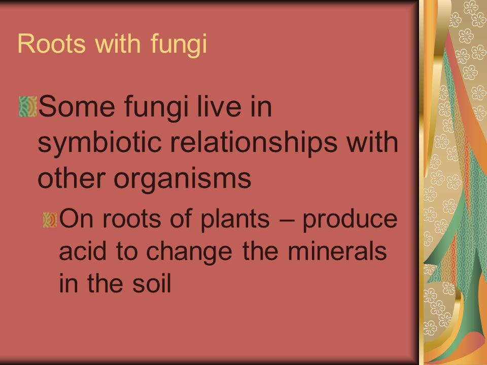 Some fungi live in symbiotic relationships with other organisms