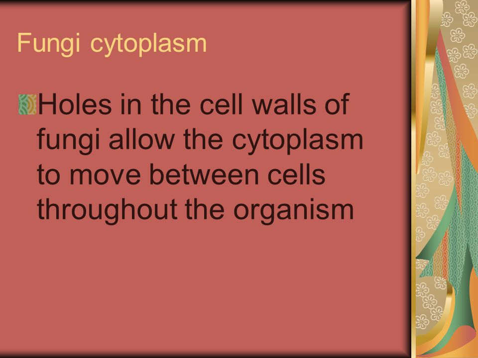 Fungi cytoplasm Holes in the cell walls of fungi allow the cytoplasm to move between cells throughout the organism.