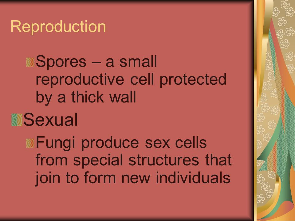 Reproduction Spores – a small reproductive cell protected by a thick wall. Sexual.
