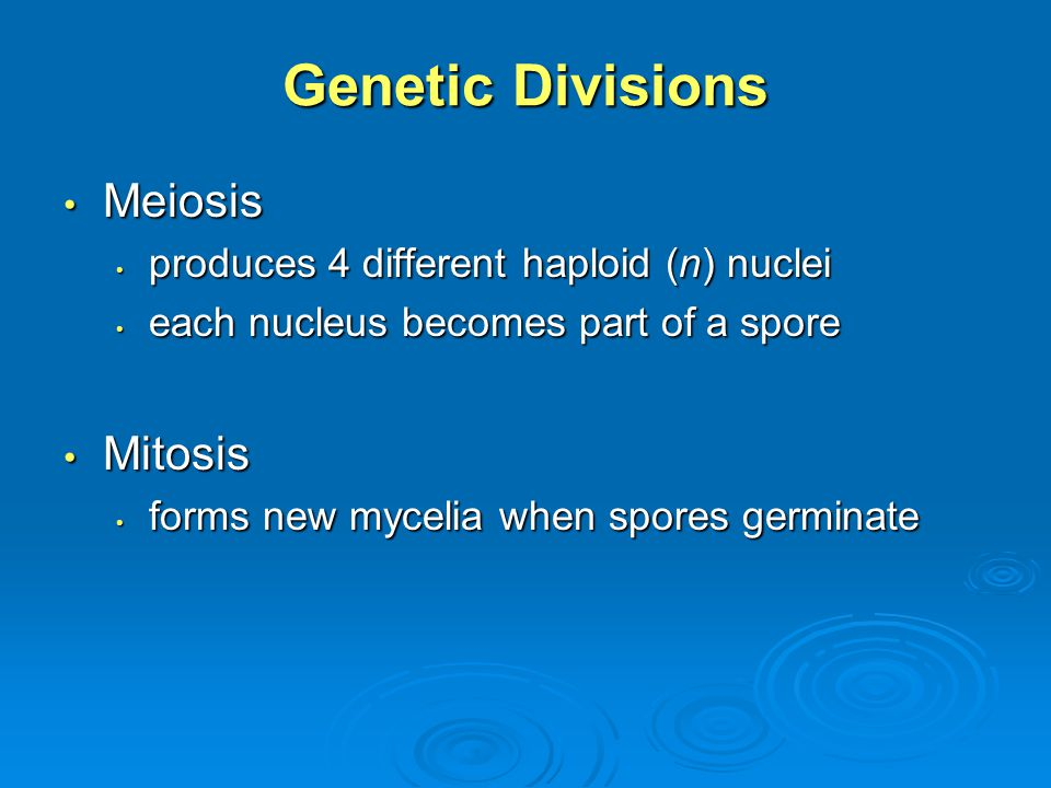 Genetic Divisions Meiosis Mitosis