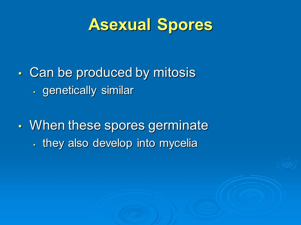 Asexual Spores Can be produced by mitosis When these spores germinate