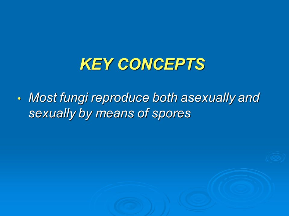 KEY CONCEPTS Most fungi reproduce both asexually and sexually by means of spores