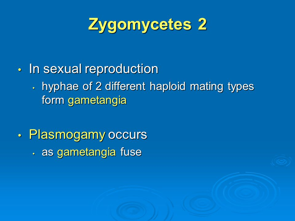 Zygomycetes 2 In sexual reproduction Plasmogamy occurs