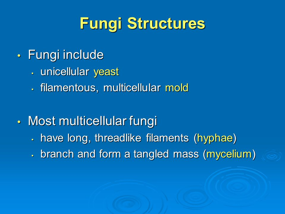 Fungi Structures Fungi include Most multicellular fungi