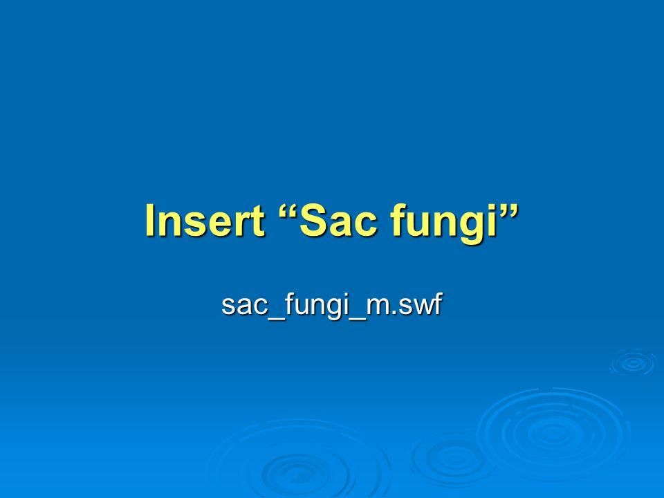 Insert Sac fungi sac_fungi_m.swf