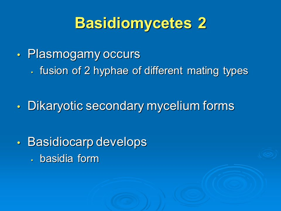 Basidiomycetes 2 Plasmogamy occurs Dikaryotic secondary mycelium forms