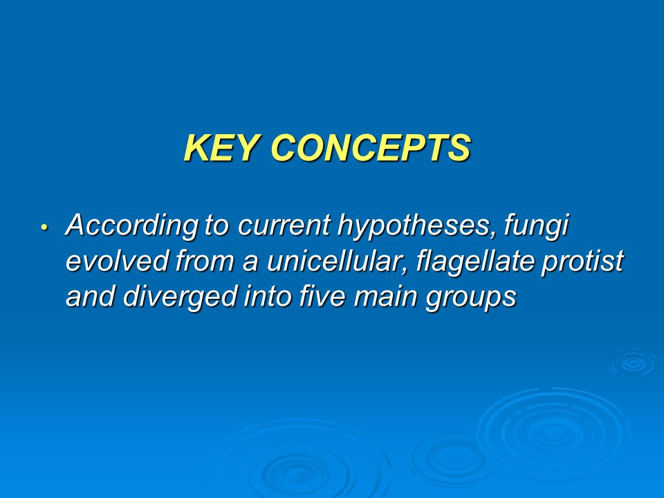 KEY CONCEPTS According to current hypotheses, fungi evolved from a unicellular, flagellate protist and diverged into five main groups.