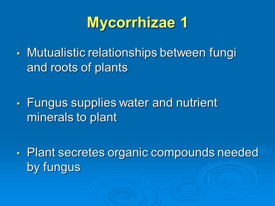 Mycorrhizae 1 Mutualistic relationships between fungi and roots of plants. Fungus supplies water and nutrient minerals to plant.