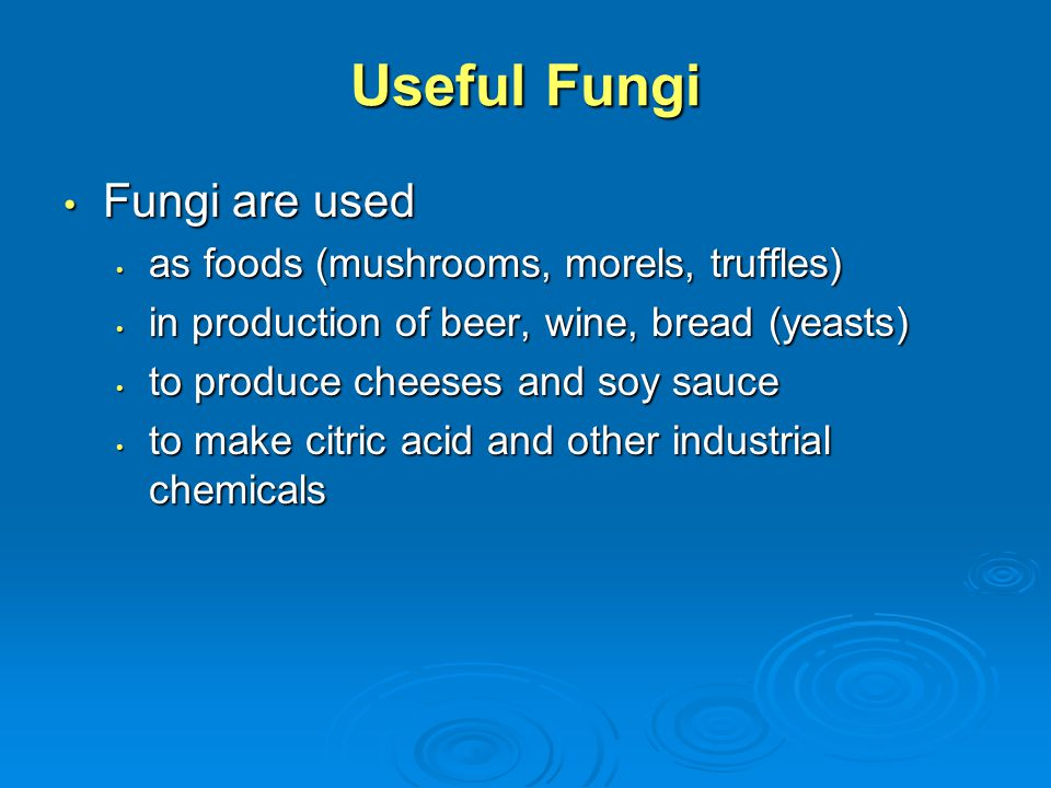 Useful Fungi Fungi are used as foods (mushrooms, morels, truffles)