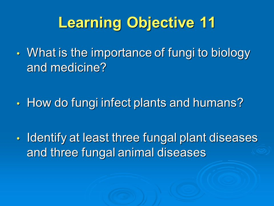 Learning Objective 11 What is the importance of fungi to biology and medicine How do fungi infect plants and humans