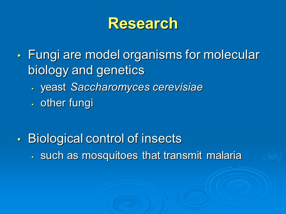 Research Fungi are model organisms for molecular biology and genetics