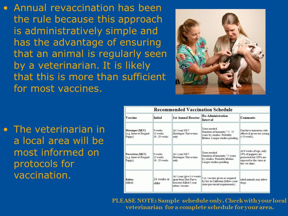 Annual revaccination has been the rule because this approach is administratively simple and has the advantage of ensuring that an animal is regularly seen by a veterinarian. It is likely that this is more than sufficient for most vaccines.
