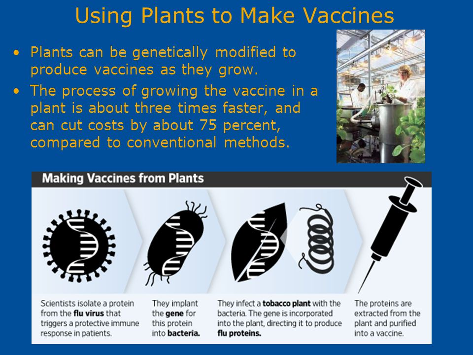 Using Plants to Make Vaccines