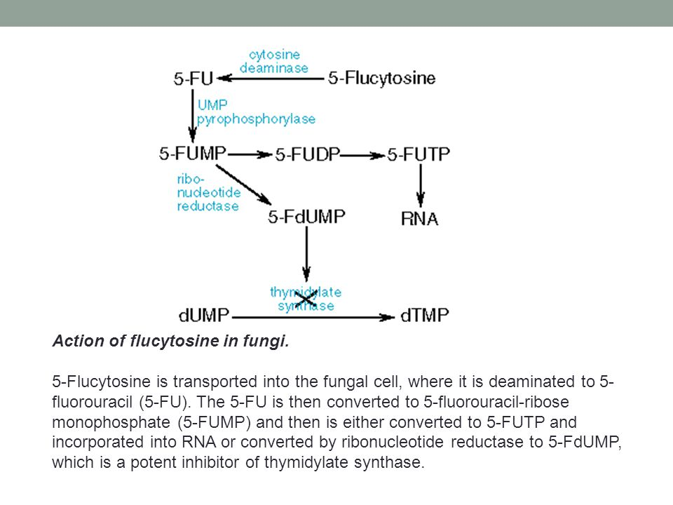 Action of flucytosine in fungi.