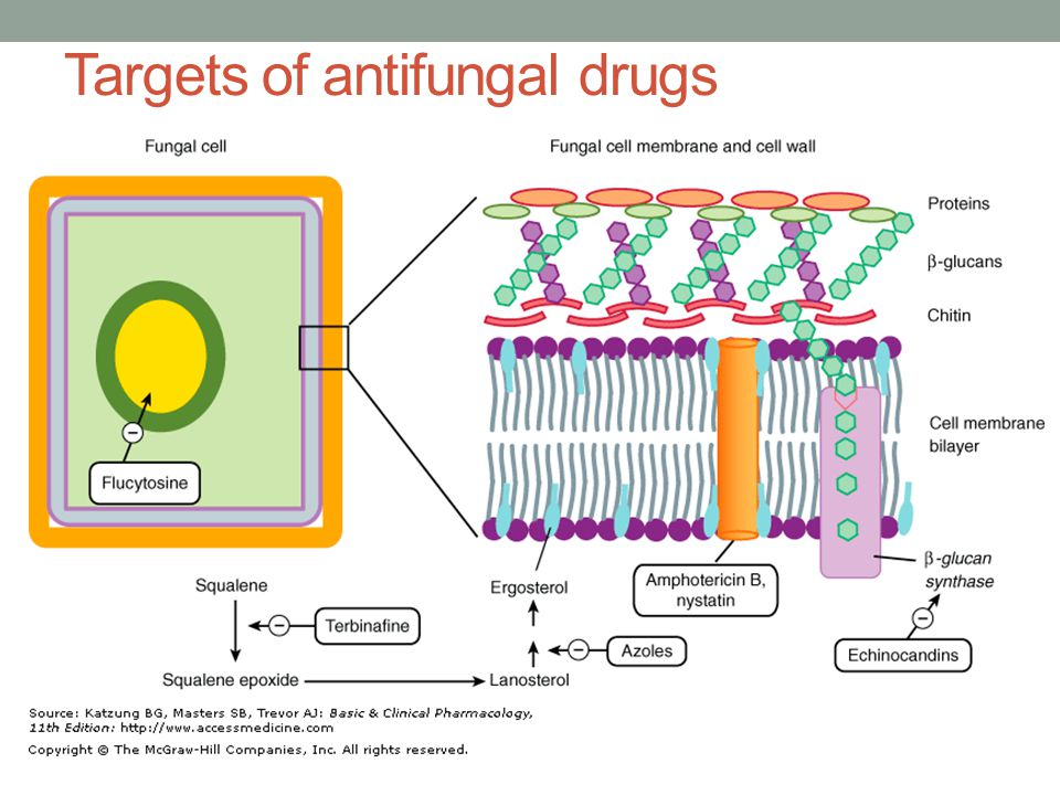 Targets of antifungal drugs