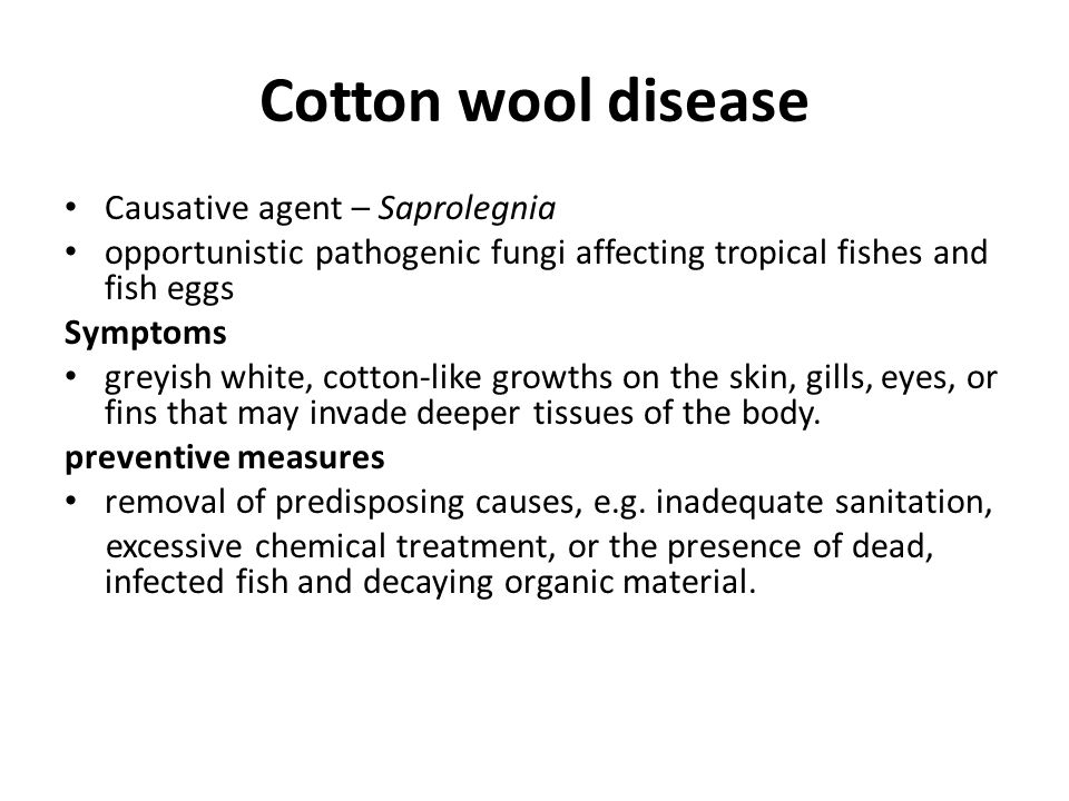 Cotton wool disease Causative agent – Saprolegnia