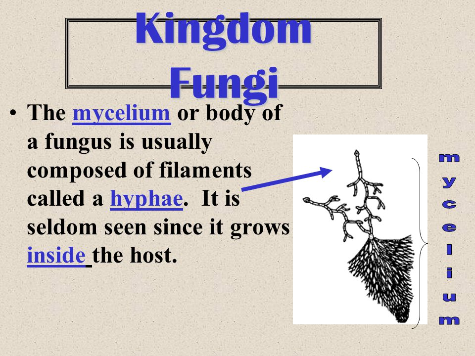 Kingdom Fungi The mycelium or body of a fungus is usually composed of filaments called a hyphae. It is seldom seen since it grows inside the host.