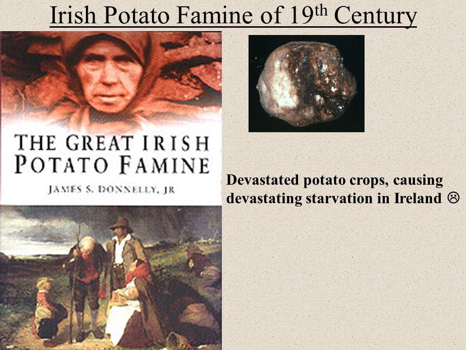 Irish Potato Famine of 19th Century