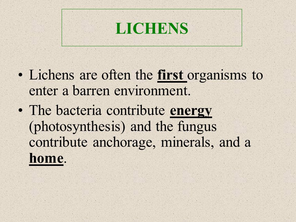 LICHENS Lichens are often the first organisms to enter a barren environment.