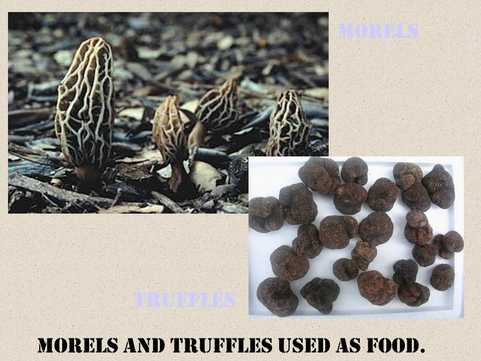 Morels Truffles Morels and truffles used as food.