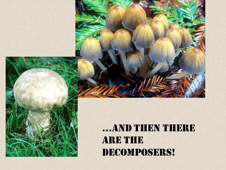 …and then there are the decomposers!