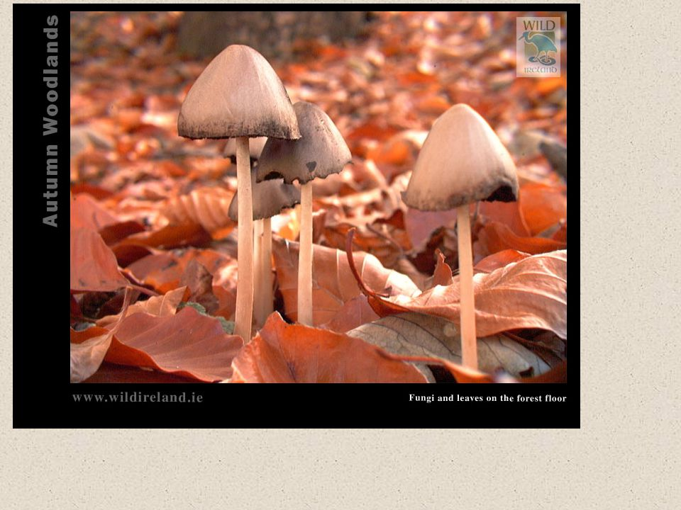 An example of Fungi You know