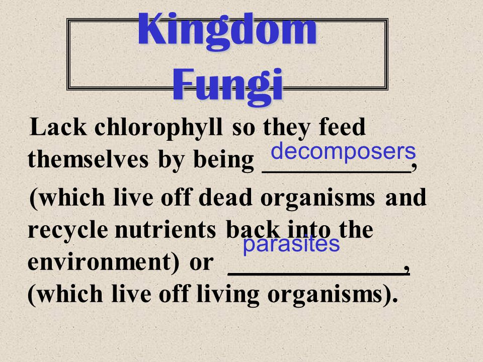 Kingdom Fungi Lack chlorophyll so they feed themselves by being ___________,