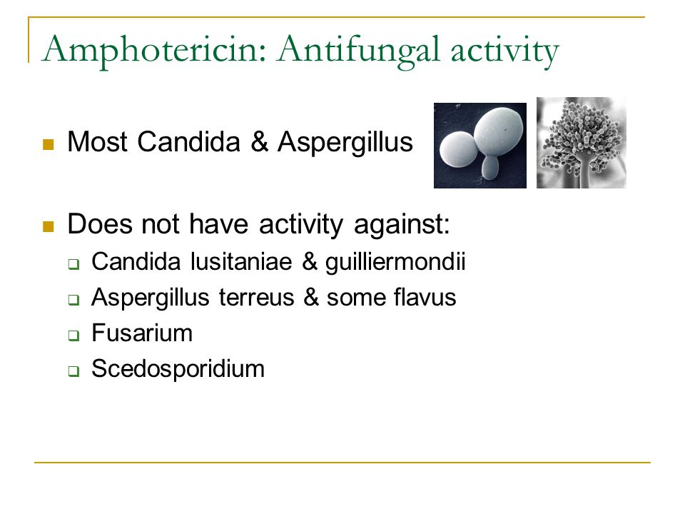 Amphotericin: Antifungal activity