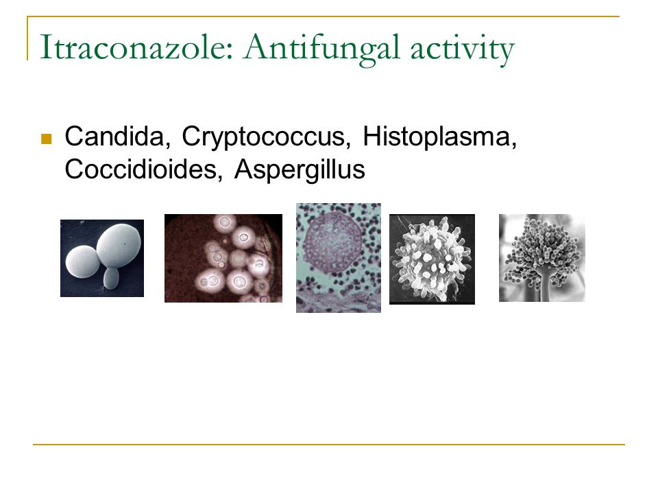 Itraconazole: Antifungal activity