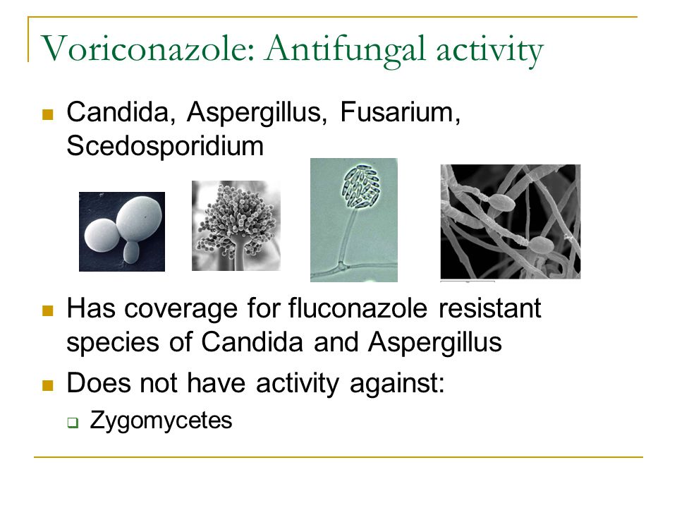 Voriconazole: Antifungal activity