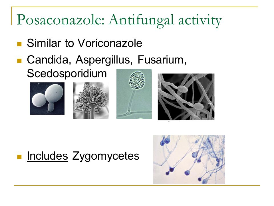 Posaconazole: Antifungal activity