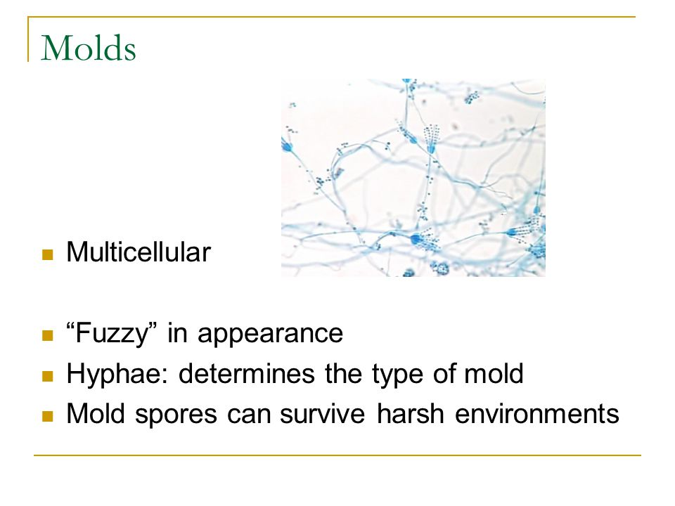 Molds Multicellular Fuzzy in appearance
