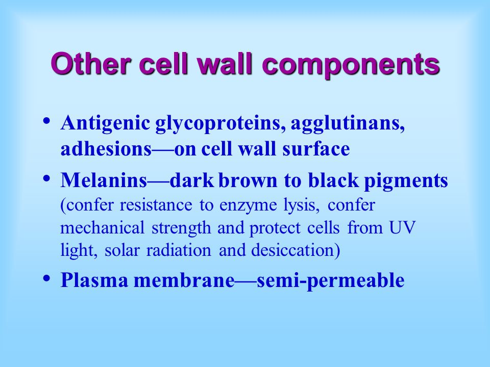 Other cell wall components