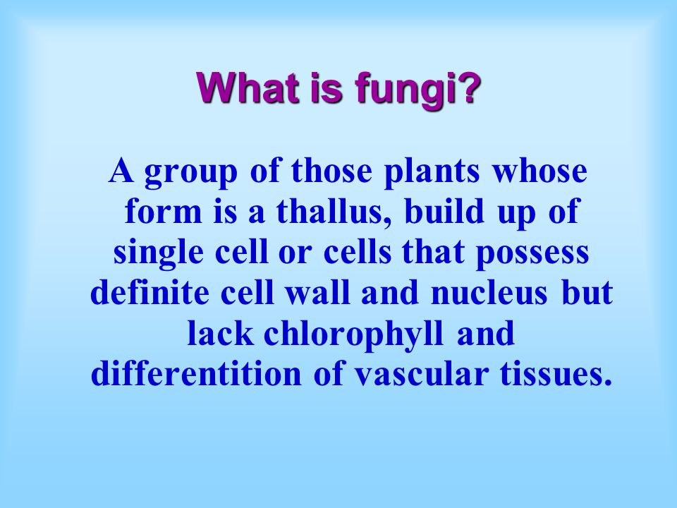 What is fungi