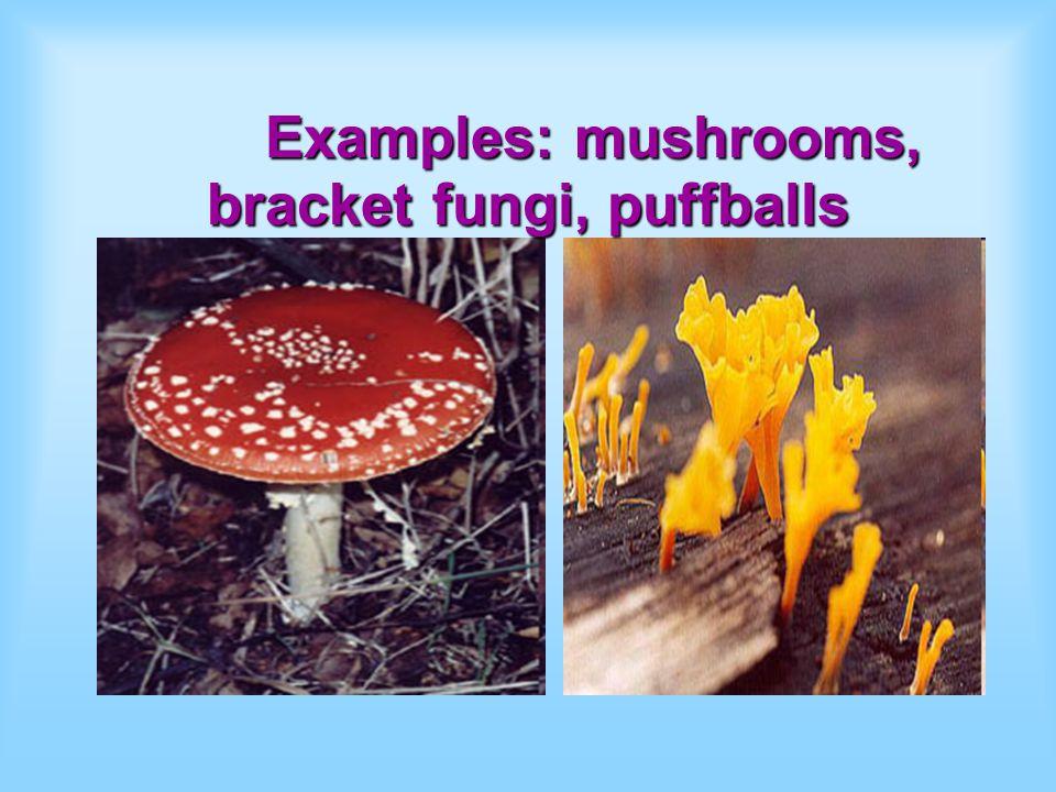Examples: mushrooms, bracket fungi, puffballs