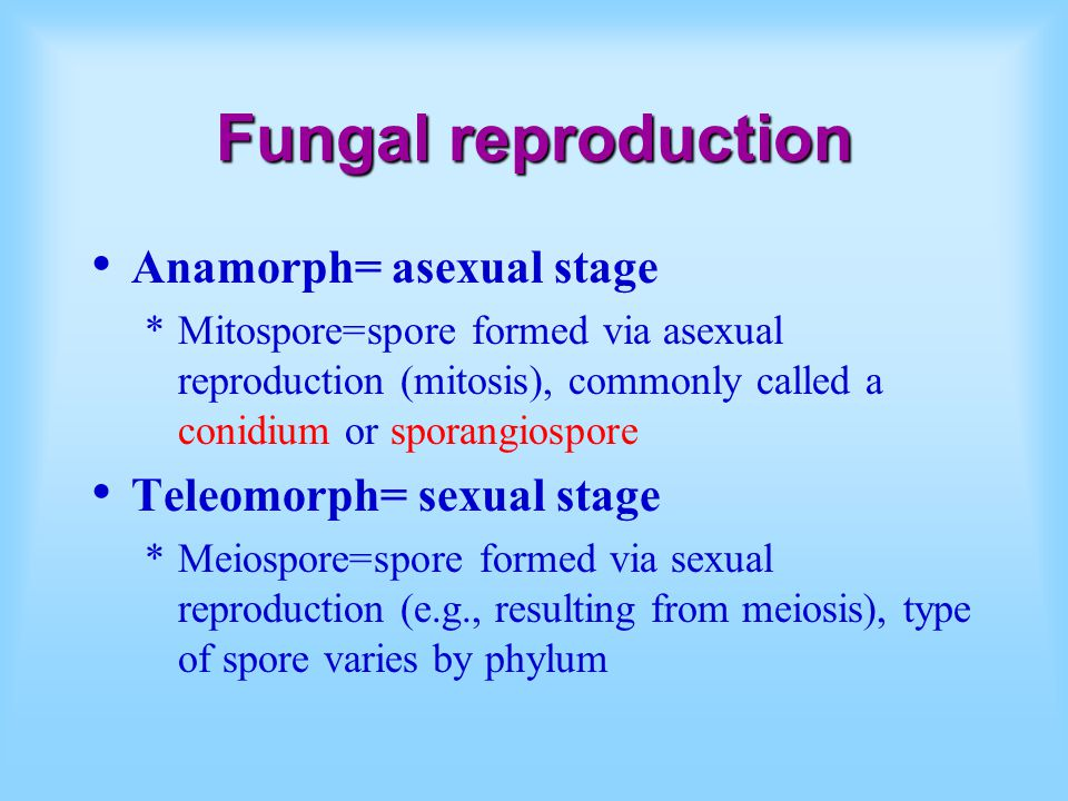 Fungal reproduction Anamorph= asexual stage Teleomorph= sexual stage
