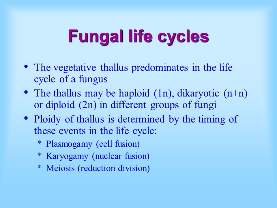 Fungal life cycles The vegetative thallus predominates in the life cycle of a fungus.
