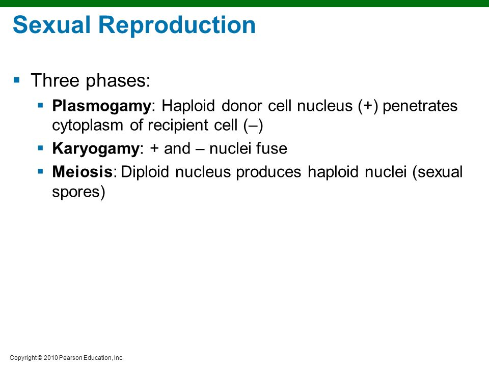 Sexual Reproduction Three phases: