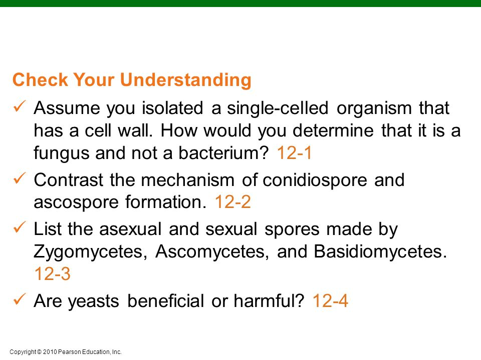 Assume you isolated a single-celled organism that has a cell wall