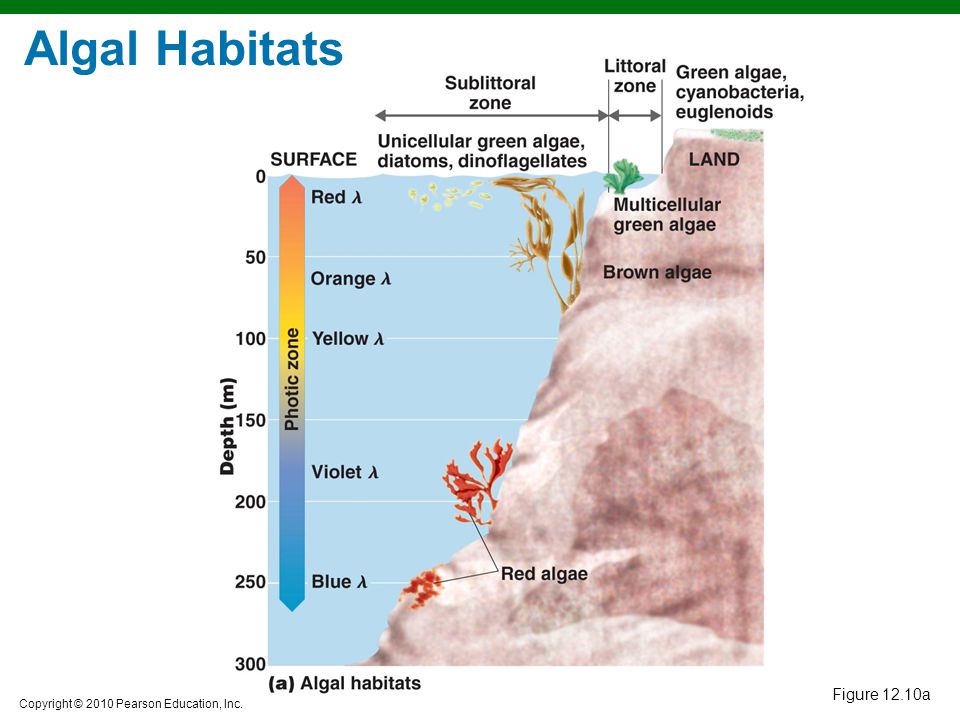 Algal Habitats Figure 12.10a