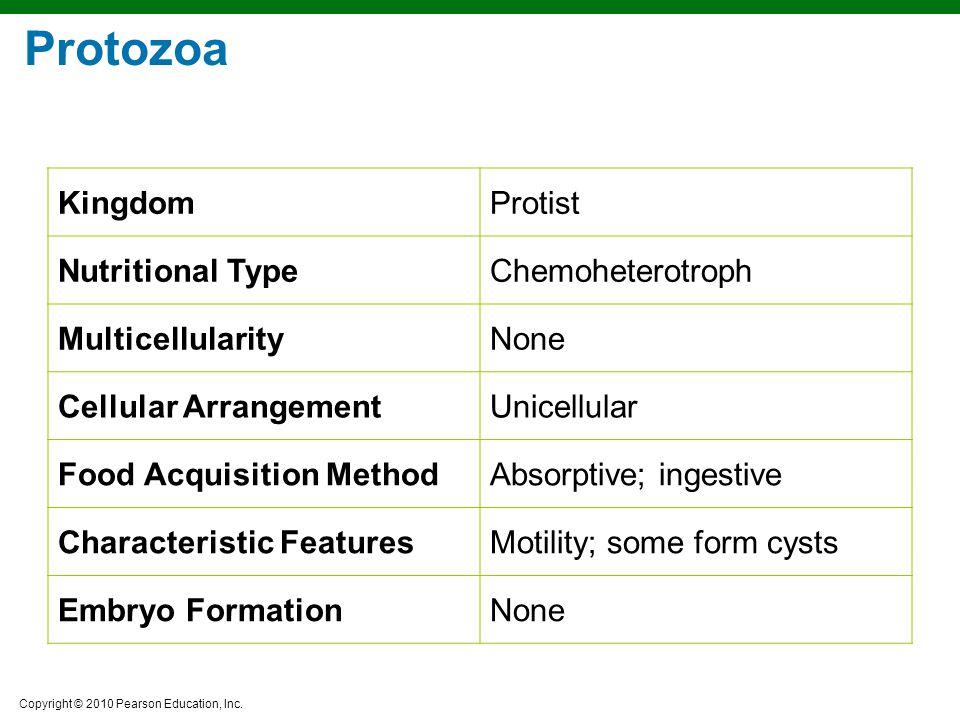 Protozoa Kingdom Protist Nutritional Type Chemoheterotroph