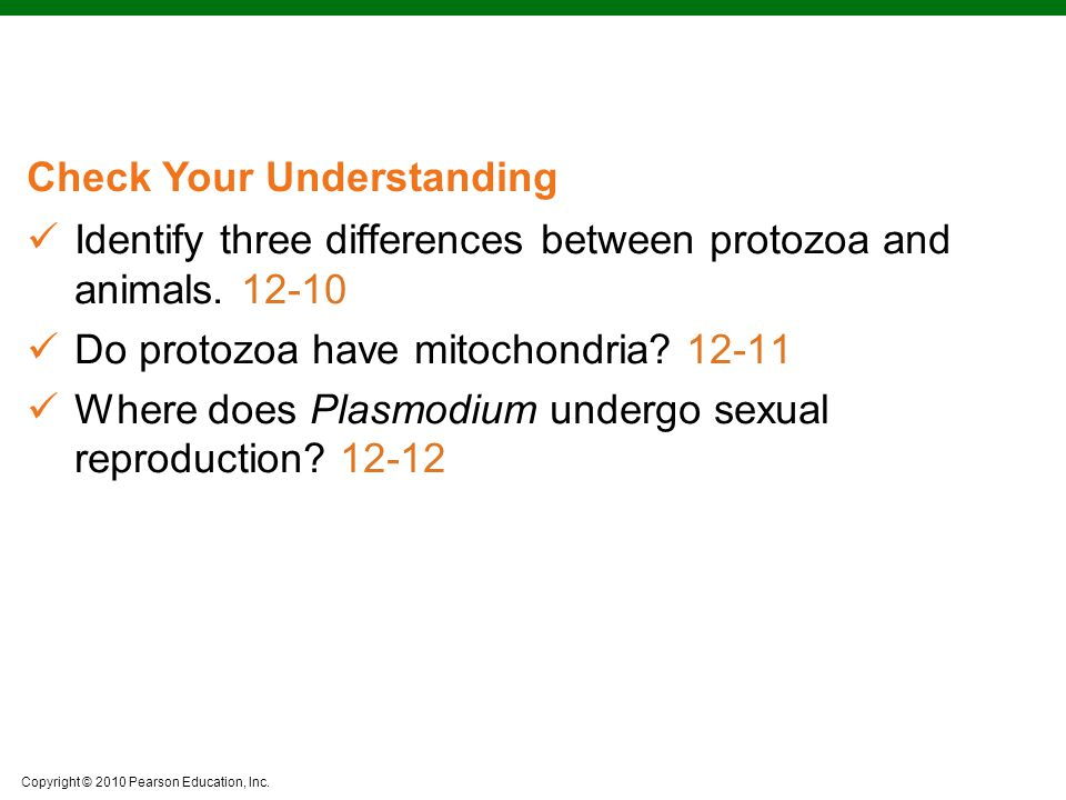 Identify three differences between protozoa and animals. 12-10