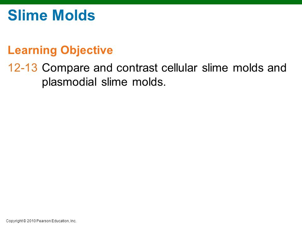 Slime Molds Learning Objective