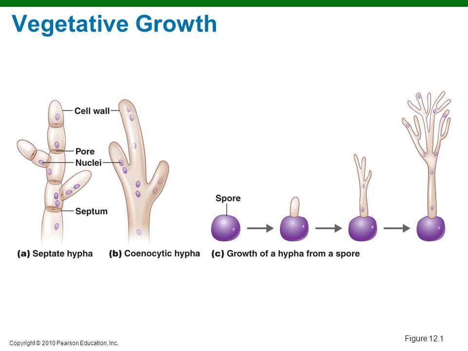 Vegetative Growth Figure 12.1