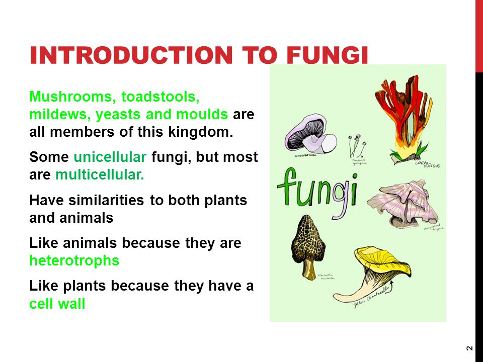 Introduction to Fungi Mushrooms, toadstools, mildews, yeasts and moulds are all members of this kingdom.