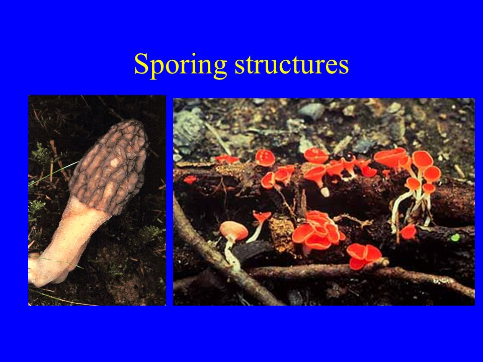 Sporing structures