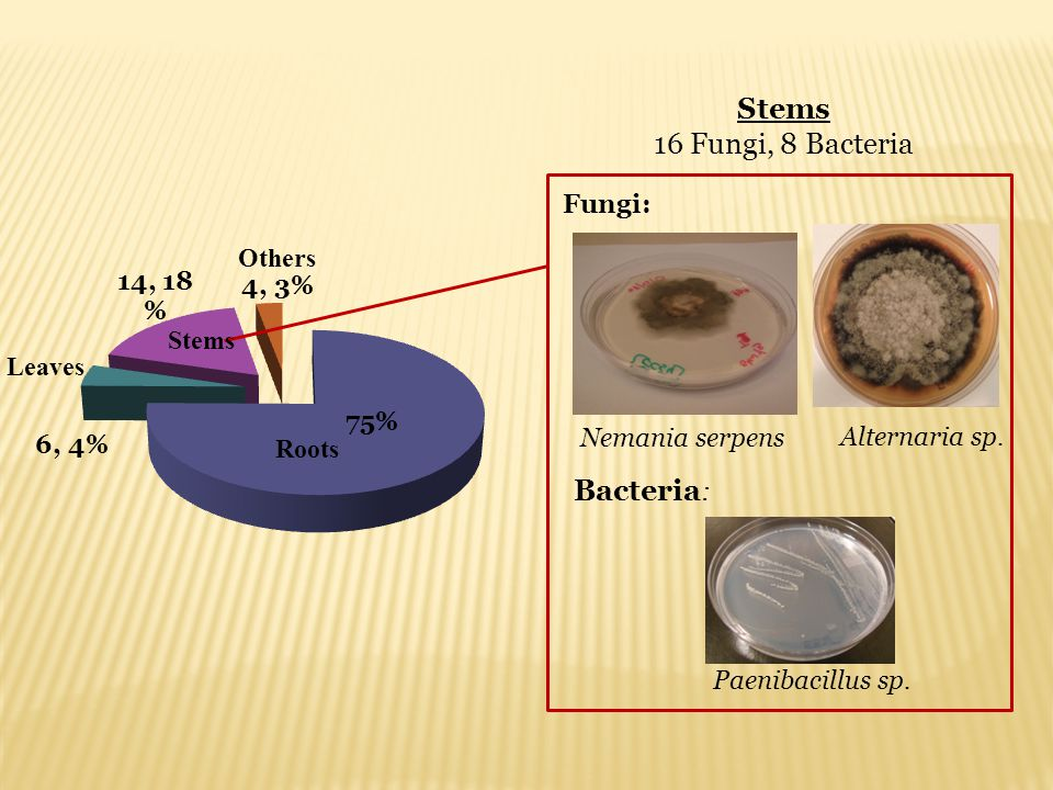 Stems 16 Fungi, 8 Bacteria Bacteria: Fungi: Others Stems Leaves