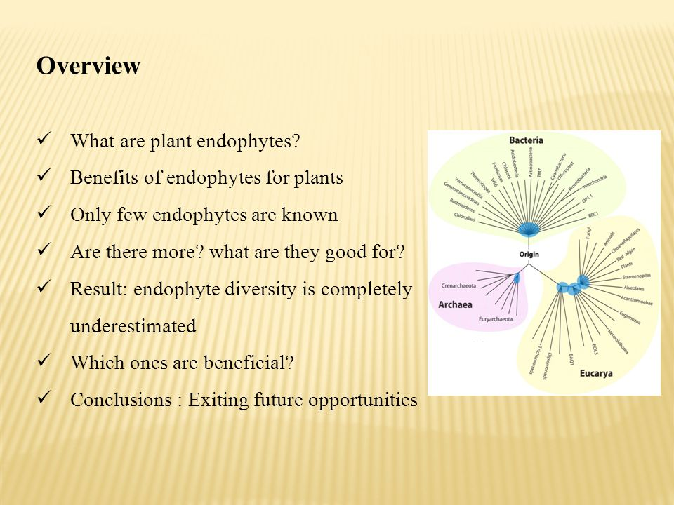 Overview What are plant endophytes Benefits of endophytes for plants