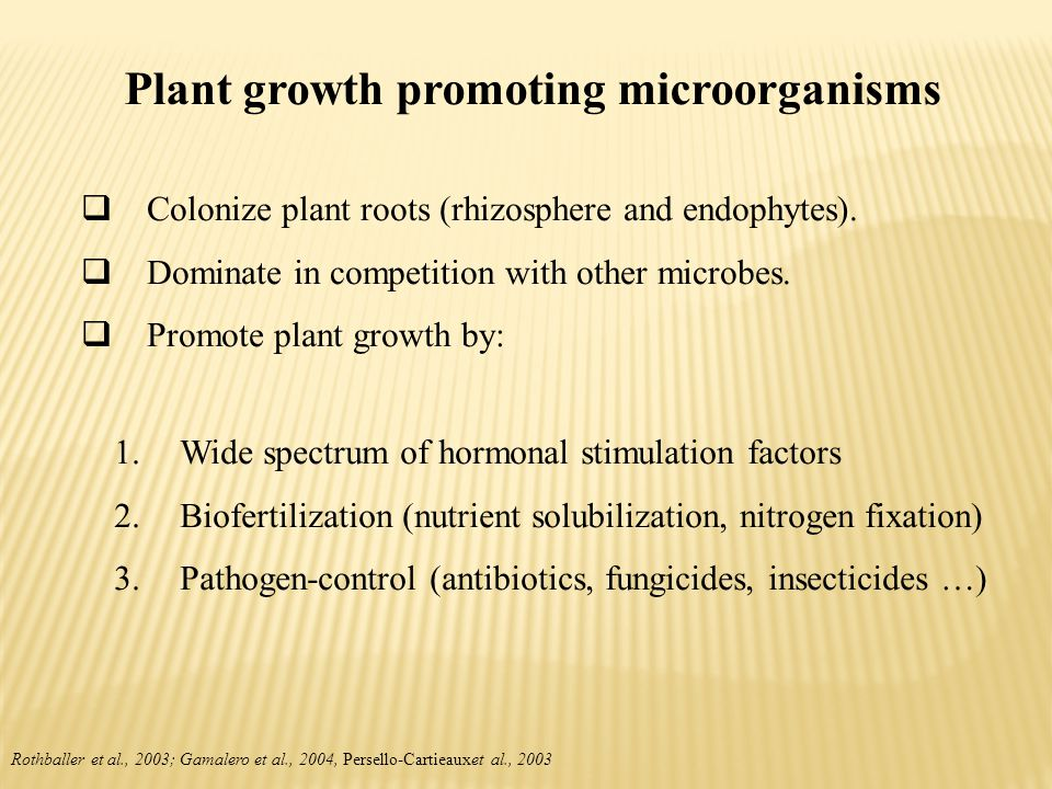 Plant growth promoting microorganisms